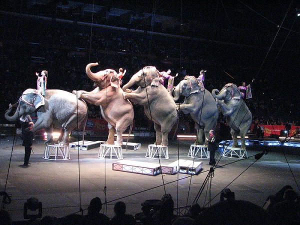 Exploitation of exotic animals in Australian circuses should..