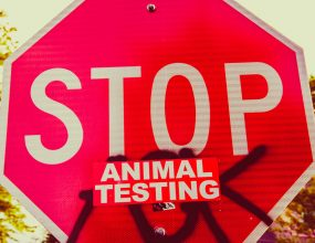 The fight to ban animal testing.