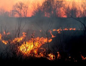 Grassfires destroy homes in Victoria's south-west