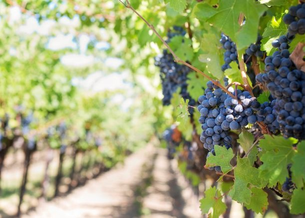 Viticulture and climate change in Australia