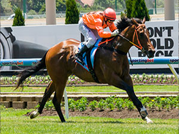 Guide to Blue Diamond Stakes