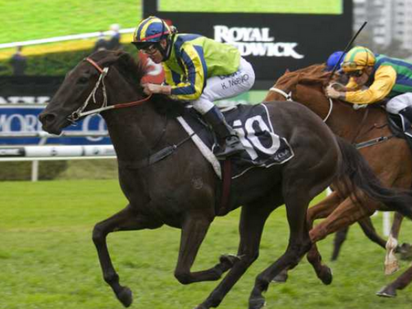 The unpredictability of the Melbourne Cup means lead-up form..