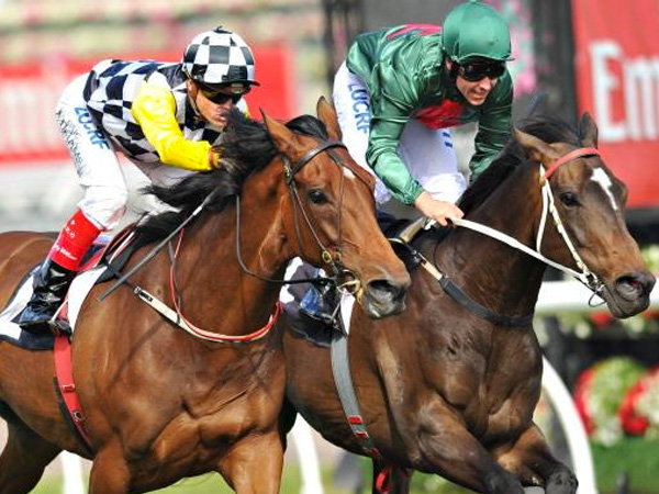Melbourne Cup preview