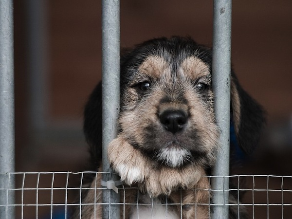 No more factory-farmed puppies in the window