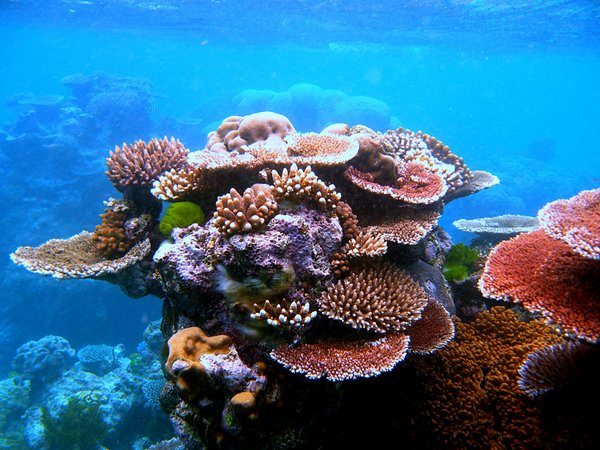 Great Barrier Reef not safe from mining