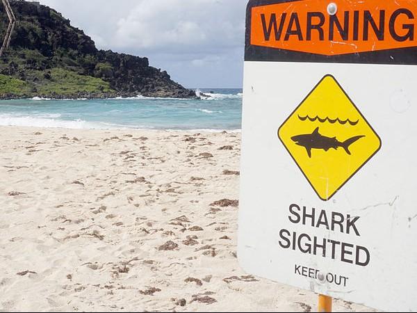 The Shark Files: Summer trials after shark summit