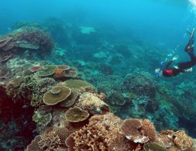 Great Barrier Reef: A reef on the brink
