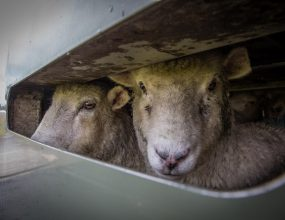 Tough new standard for live export trade