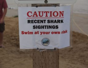 Shark prevention becomes priority in Queensland