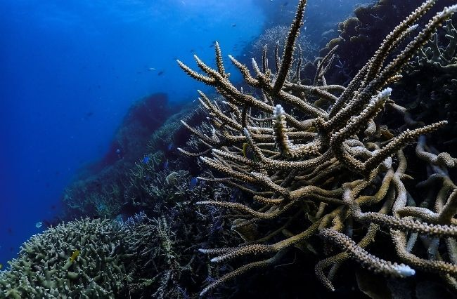Great Barrier Reef loses half of its coral.
