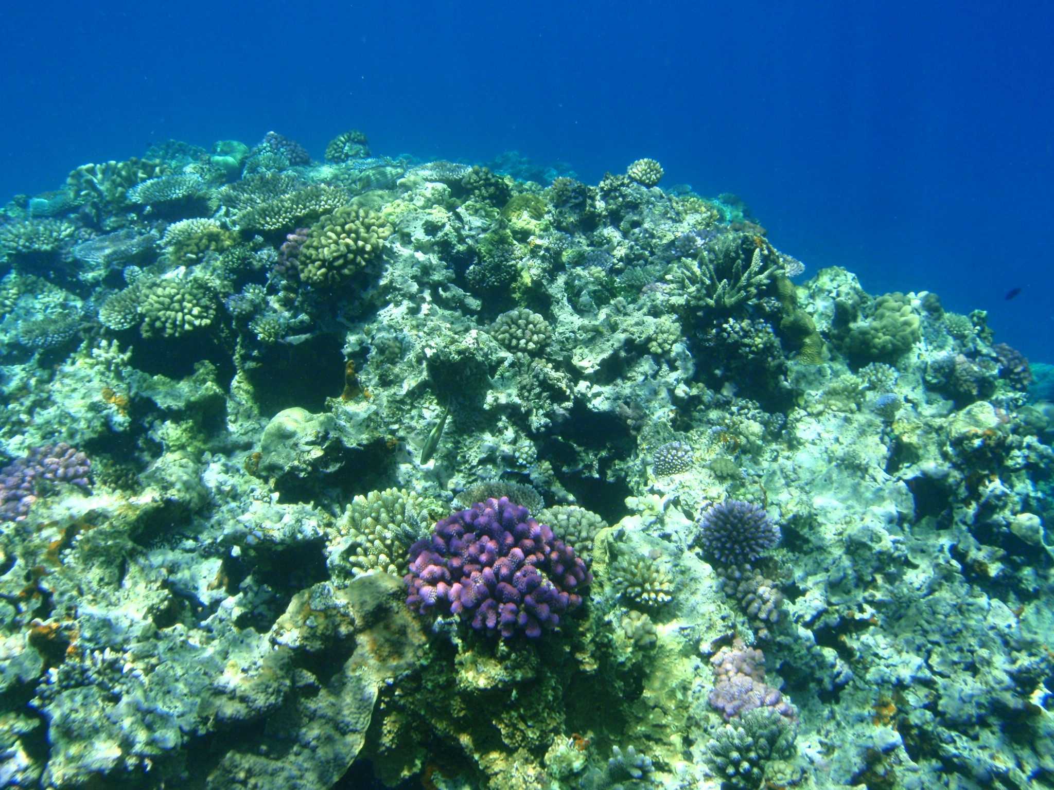 The world's coral reefs face bleak outlook