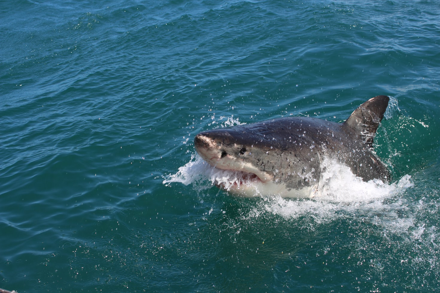 Shark attacks: On the rise or media frenzy?